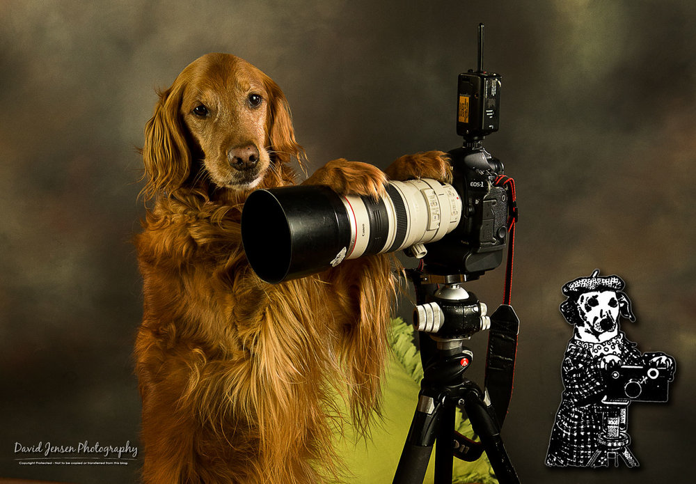 LaylaCamera.jpg