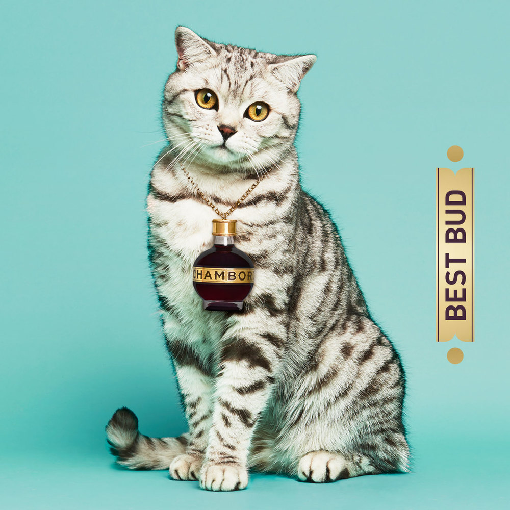 BOF_5_Cat.jpg