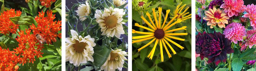 flowercloseups.jpg