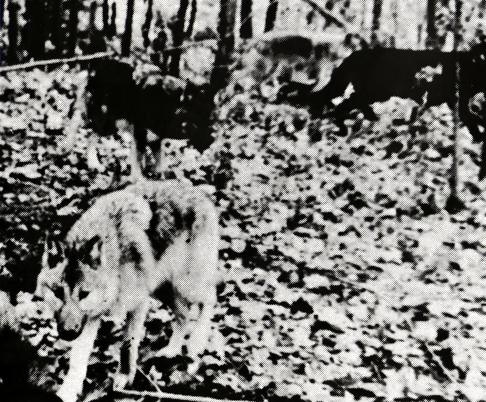bones-wolves-vancouver-installation-huebner-12.jpg