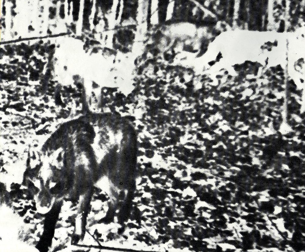 bones-wolves-vancouver-installation-huebner-13.jpg