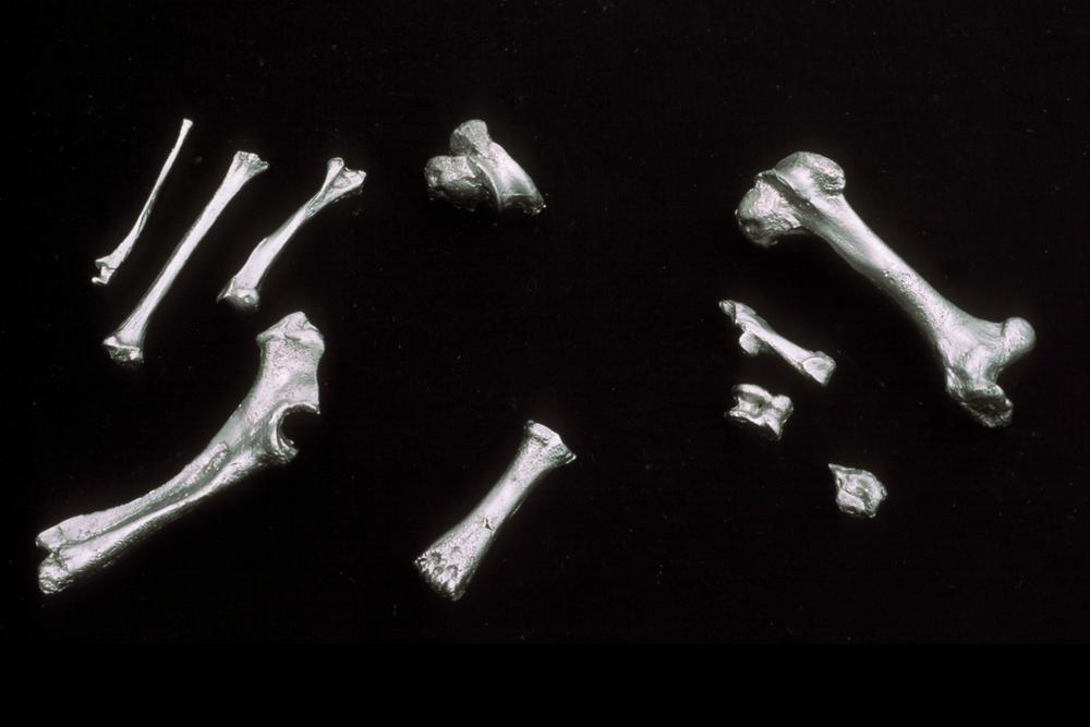 bones-wolves-vancouver-installation-huebner-9.jpg