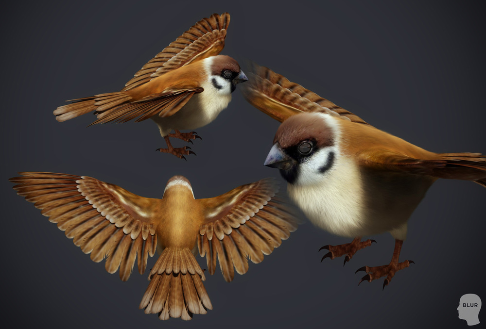 sparrow_sample1.jpg