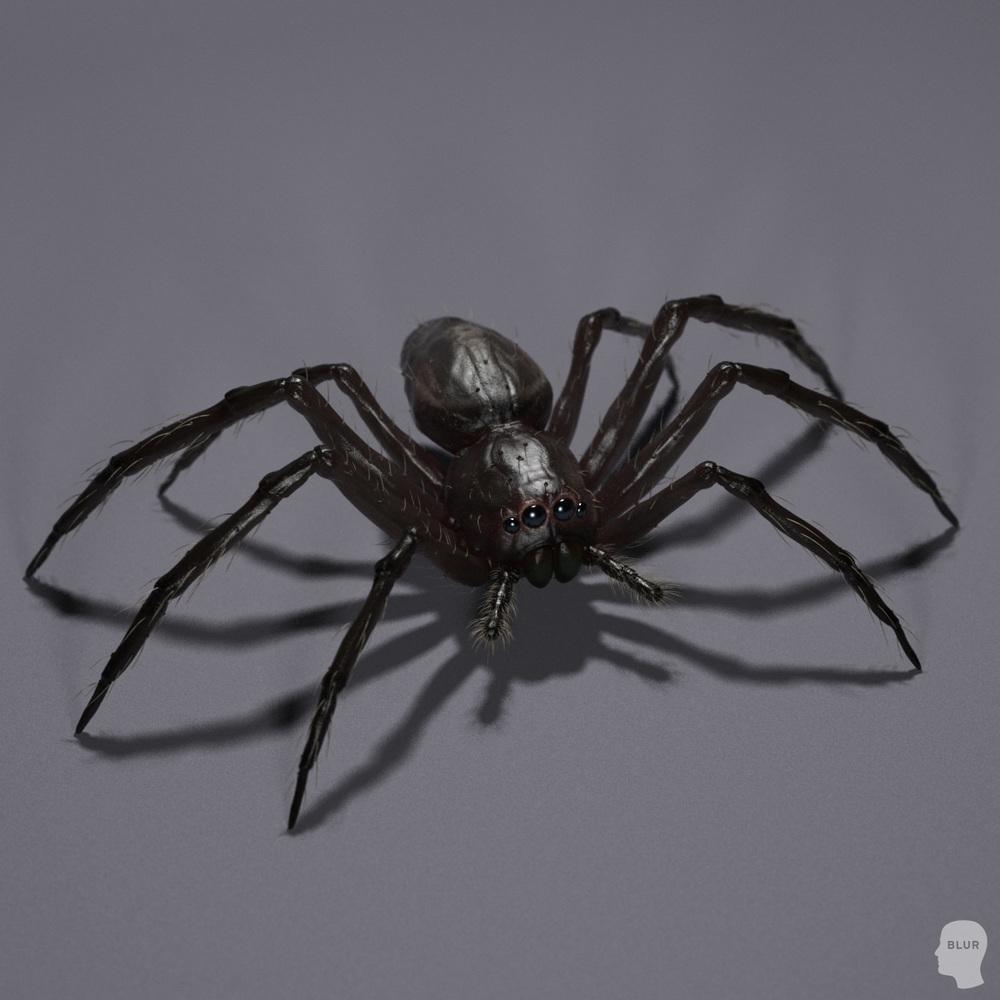 spiderblack.jpg