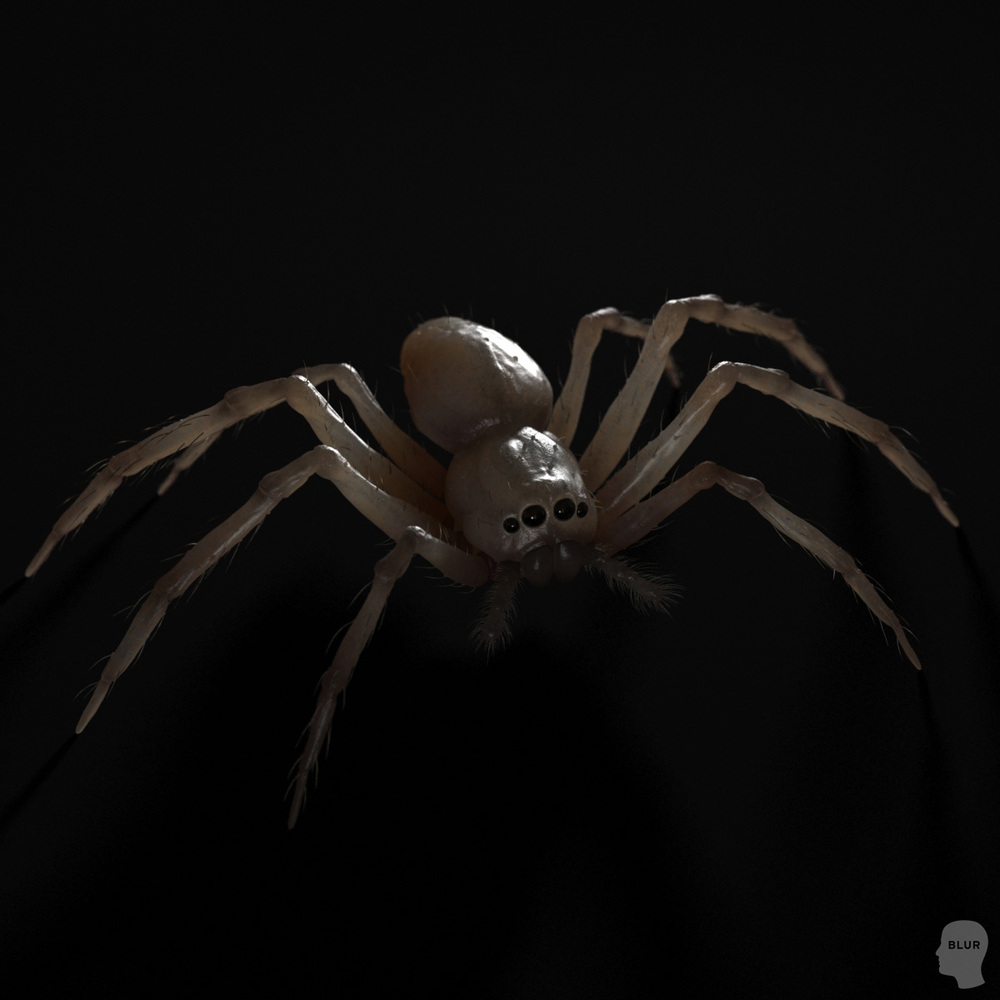 spiderwhite.jpg