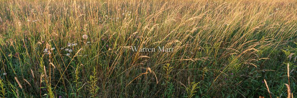 Grasses_at_Sunset.jpg