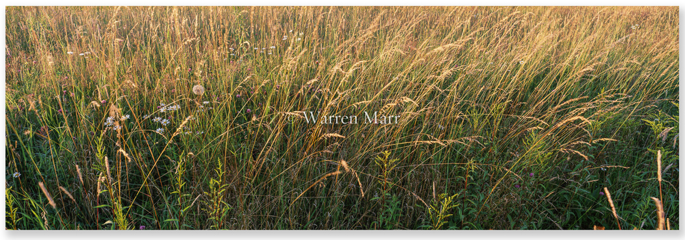 Grasses with drop flat 1475.jpg