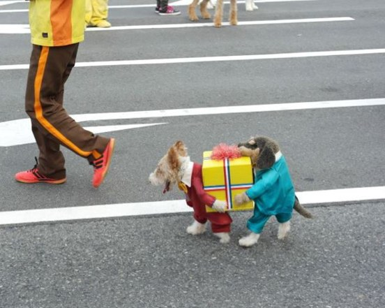 escapedgoat :      unlikelywords :     If you've seen a better picture of a dog dressed as two dogs carrying a present today, I don't believe you.         That's dope as Hell.