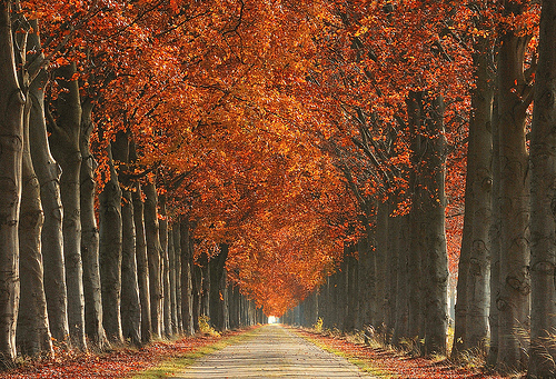 elixir :     autumn roads (by  raym☺nd )
