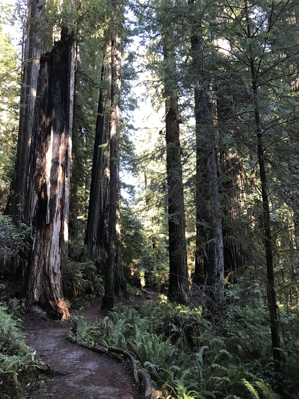 Prairie Creek Redwoods State Park in California