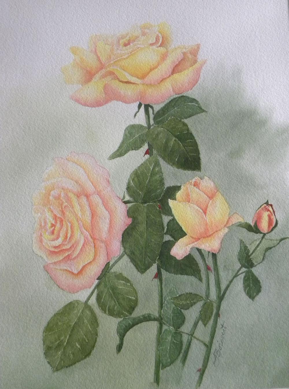 "Linda Destefanis's ""Peace Rose"""