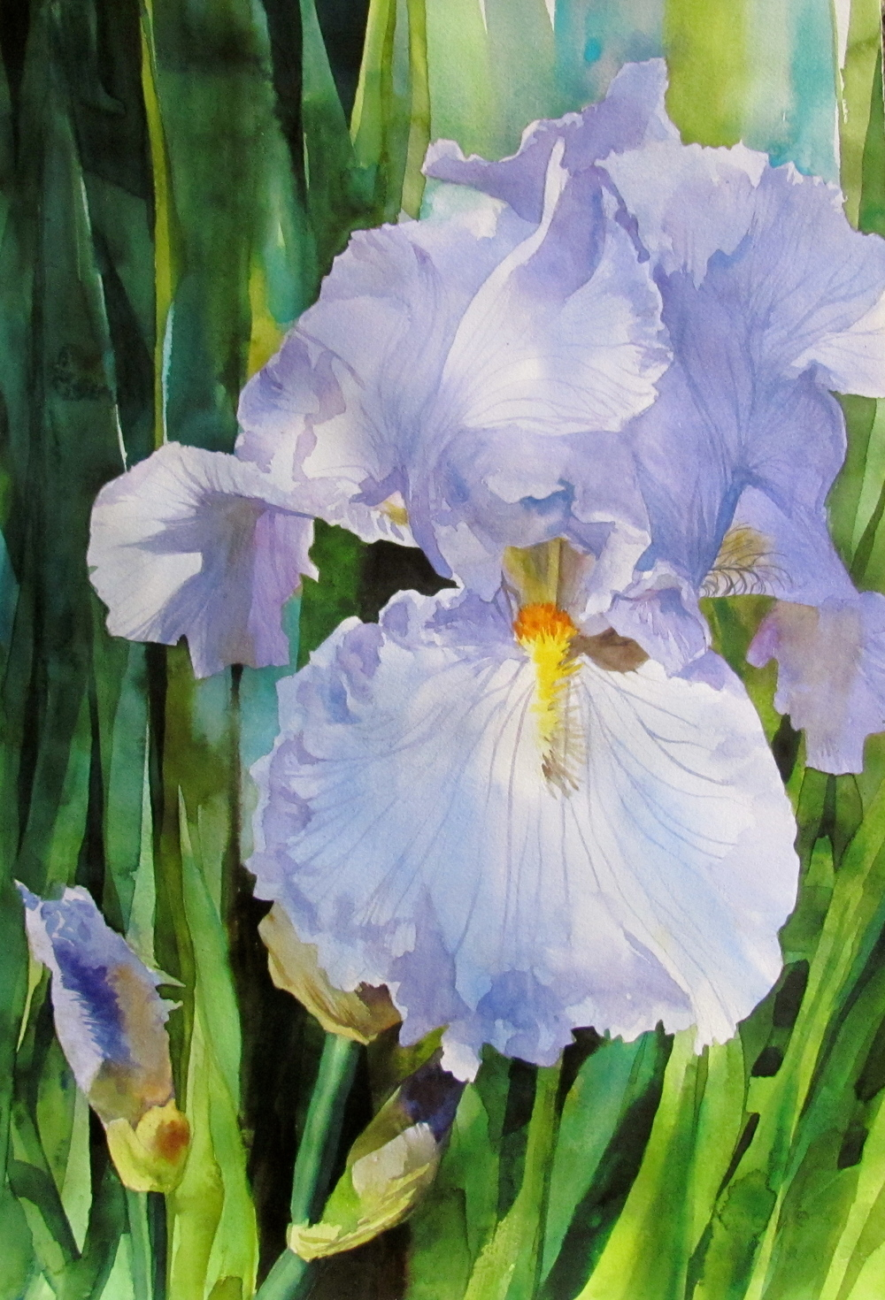 Single Iris Blossom