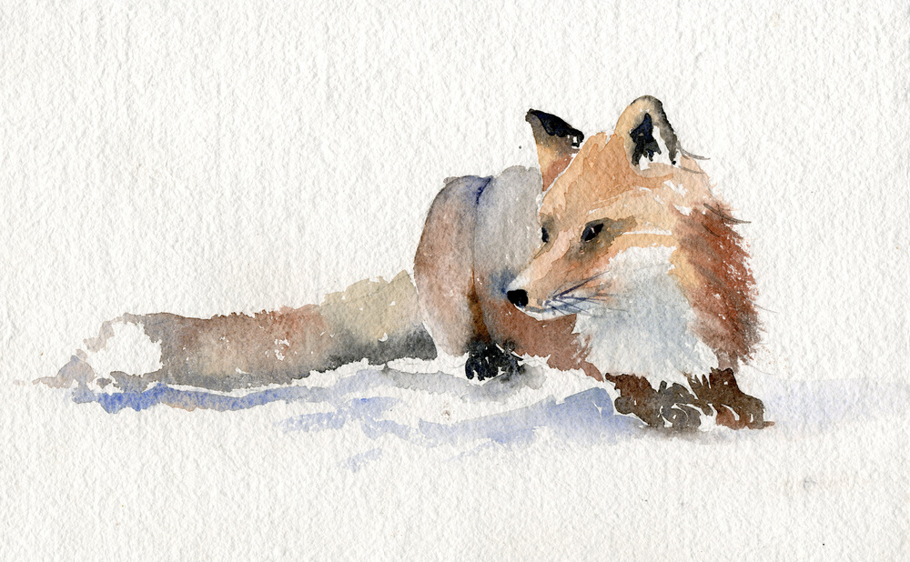 """Fox on Alert"" watercolor"