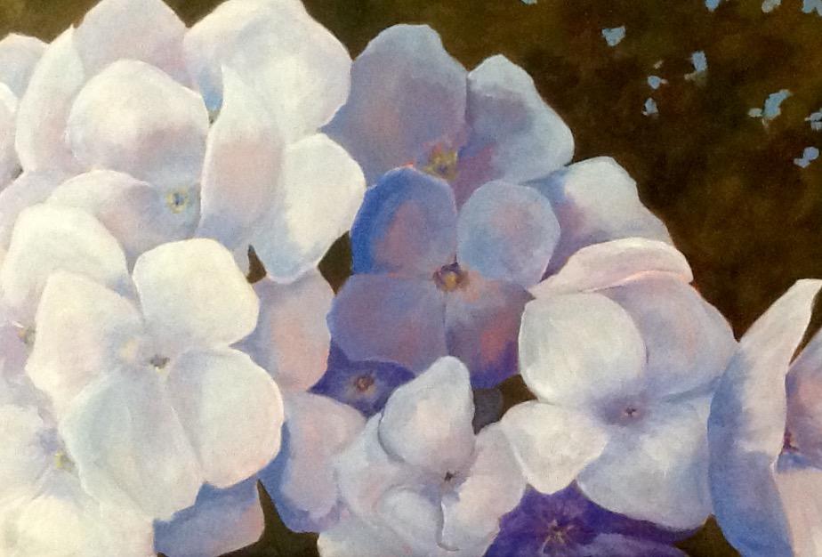 Lavender Hydrangeas