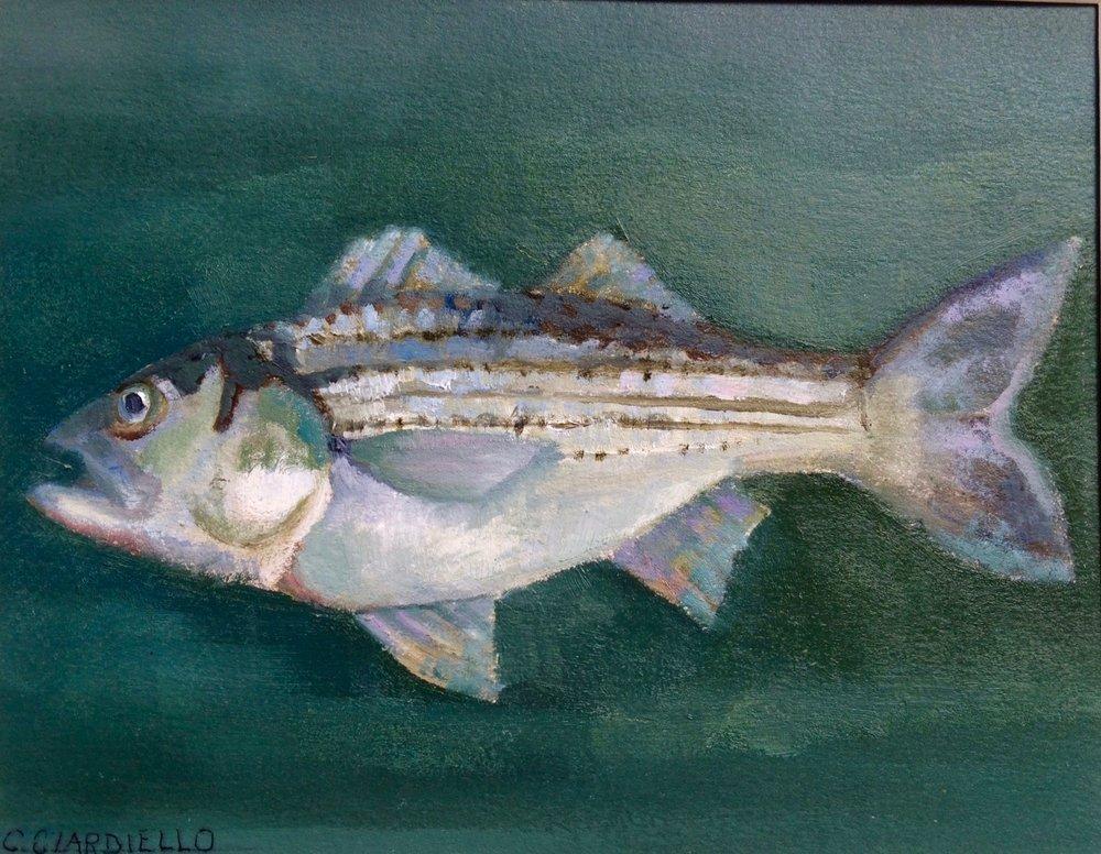 """Cathy Ciardiello's """"Striped Bass"""""""