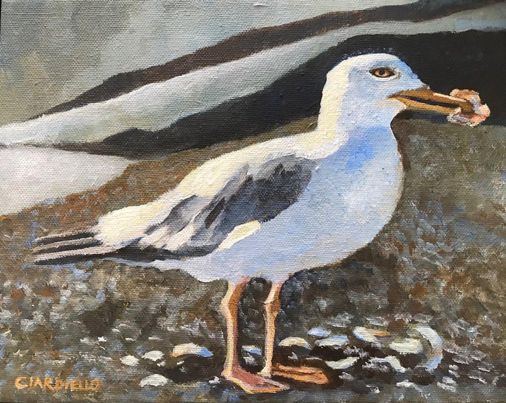 "Cathy Ciardiello's ""Gull with Clam"""