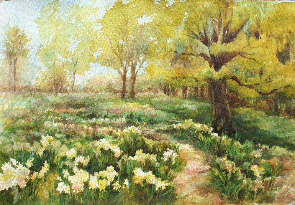 """Barbara Rossito's """"Daffodil Hill"""""""