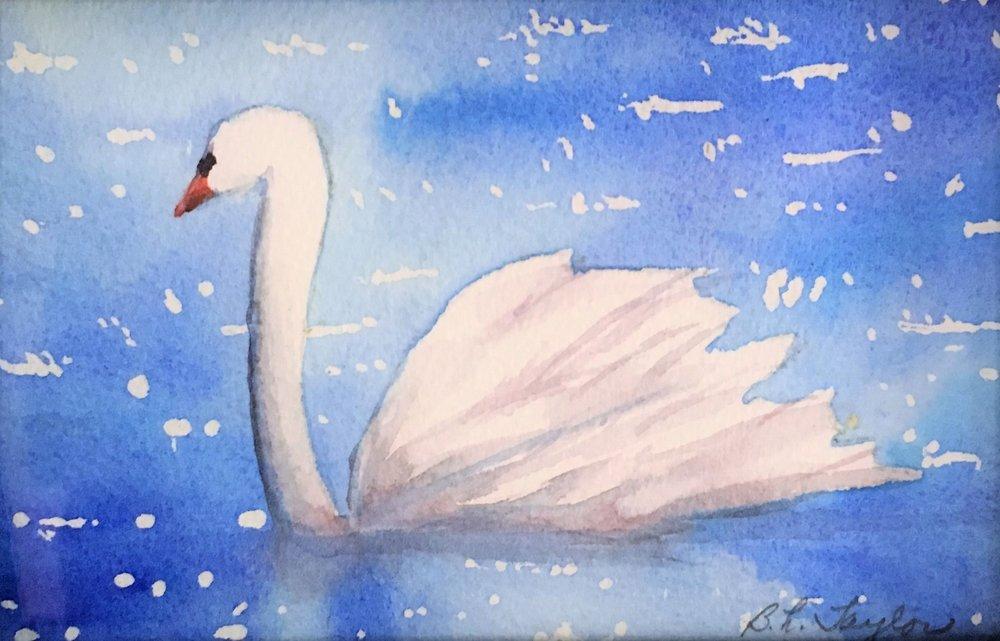 Swan in Sunlight