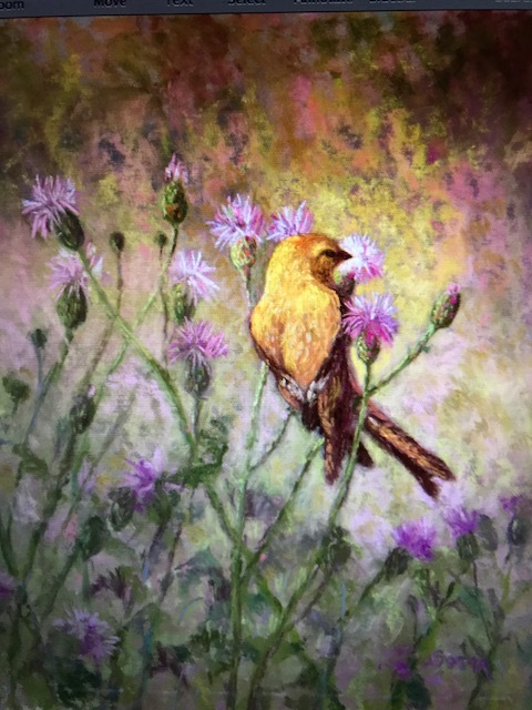 Goldfinch - English Thistle