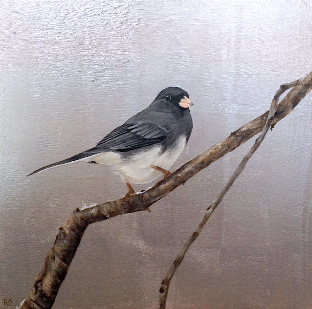 Junco on Silver