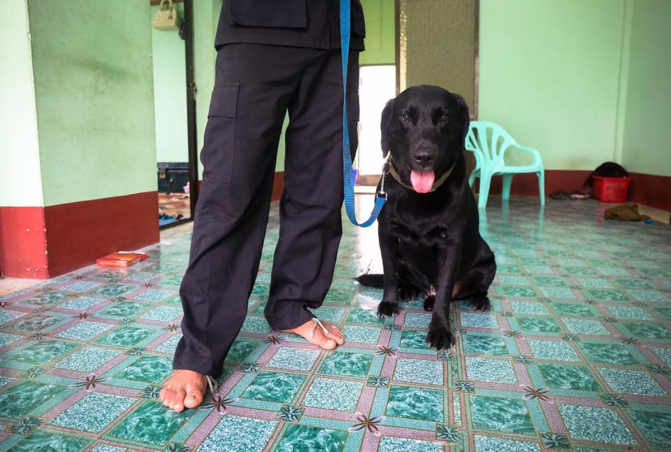 Rambo II, with his handler. Rambo is the youngest trained bomb-squad dog in Myanmar. Yangon.