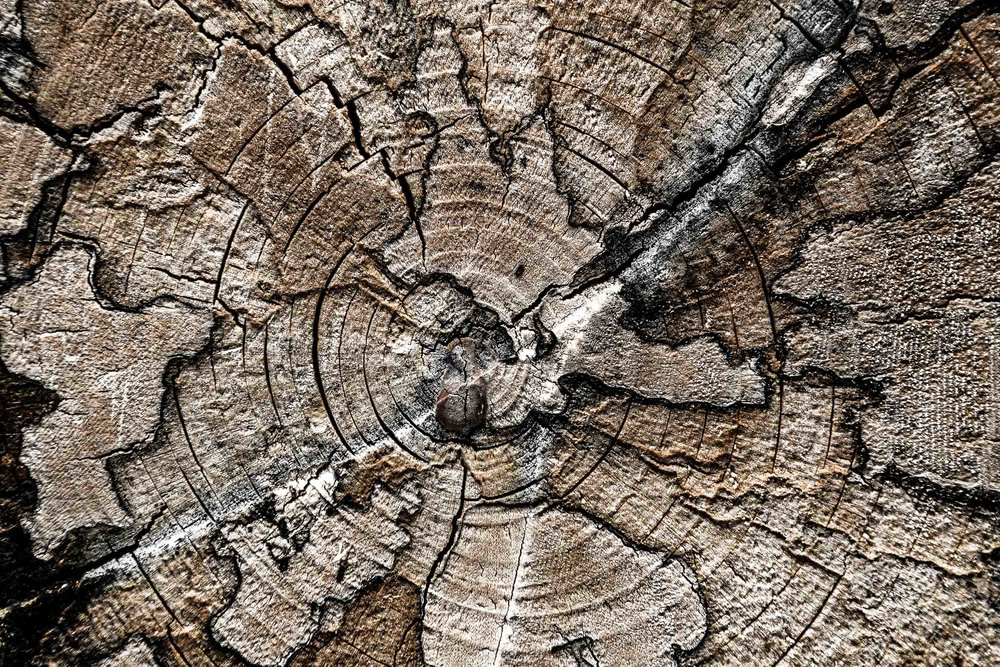 """""""Wood-Map"""", Italy"""