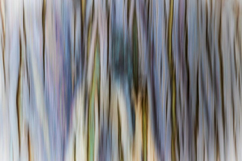 """""""Eucalyptus Bark in Motion"""", CA"""
