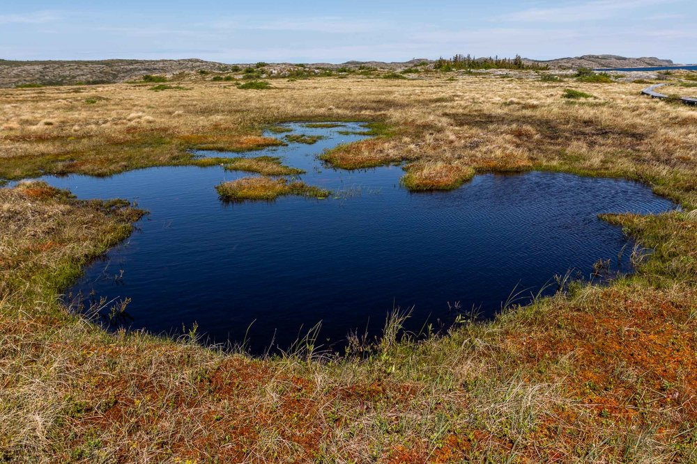 """Wetlands"", Fogo Island"