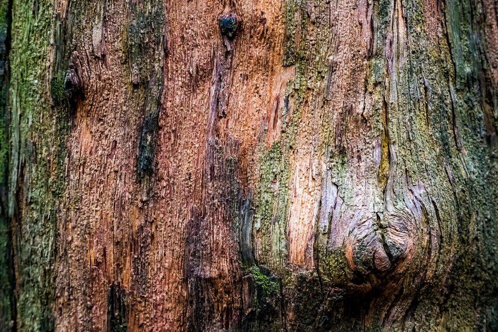 """""""Tree Bark II"""", HK"""