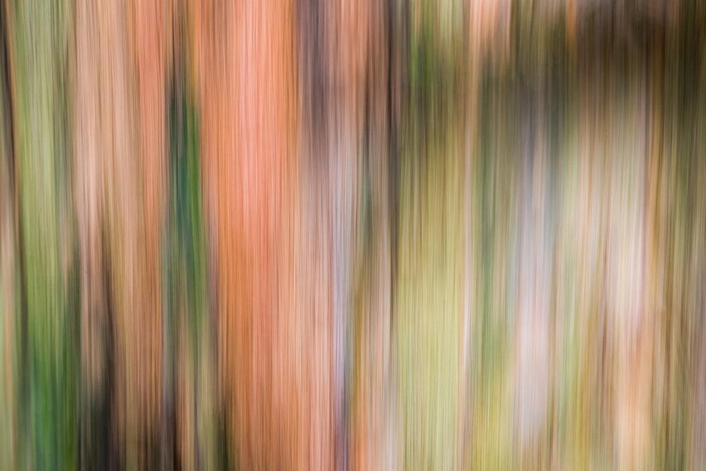 """""""Tree Bark in Motion"""", HK"""
