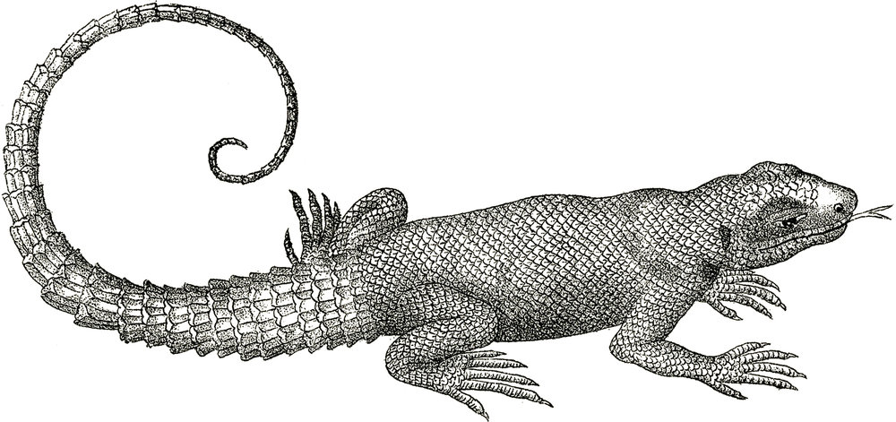 Free-Vintage-Lizard-Clip-Art-GraphicsFairy.jpg