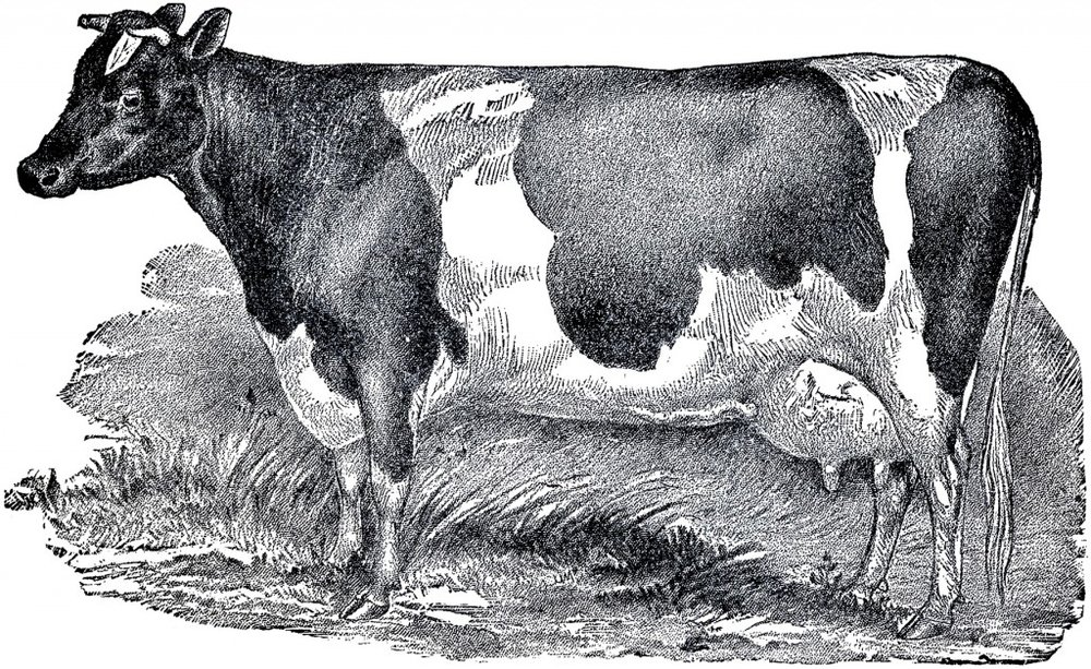 Vintage-Farmhouse-Cow-Image-GraphicsFairy-1024x628.jpg