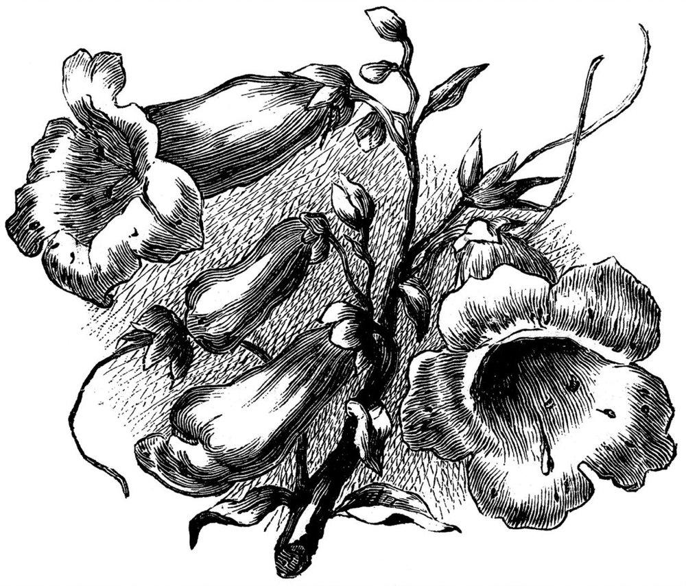 Engraving-Flowers-GraphicsFairy007-1024x876.jpg