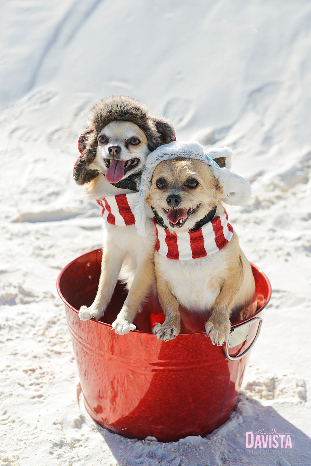 cute-puppy-dog-christmas-birthday-photos