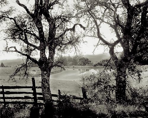 Sonoma Cow Pond Small.jpg