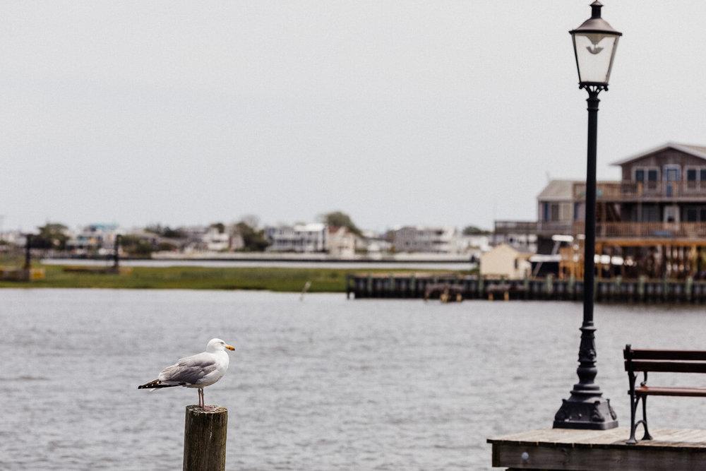 New_Jersey_Bonnet Island Estate_wedding_photography_Peter_Rigo_Photography___01_web.jpg