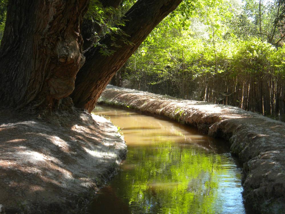 bosque-rio.jpg