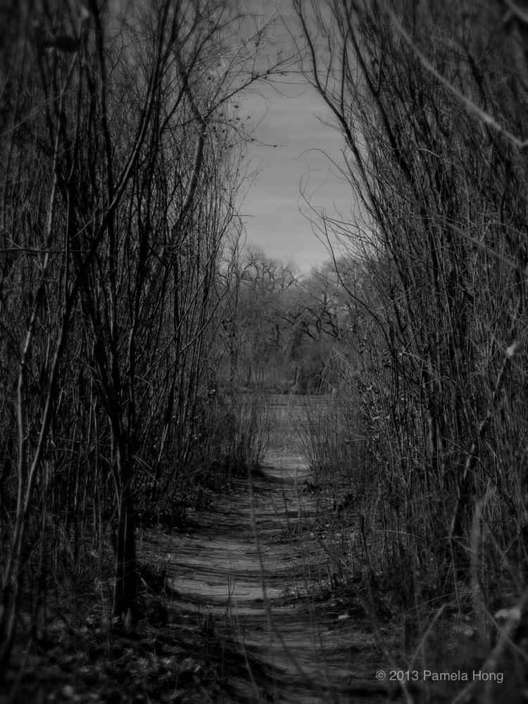 Bosque 4.jpg