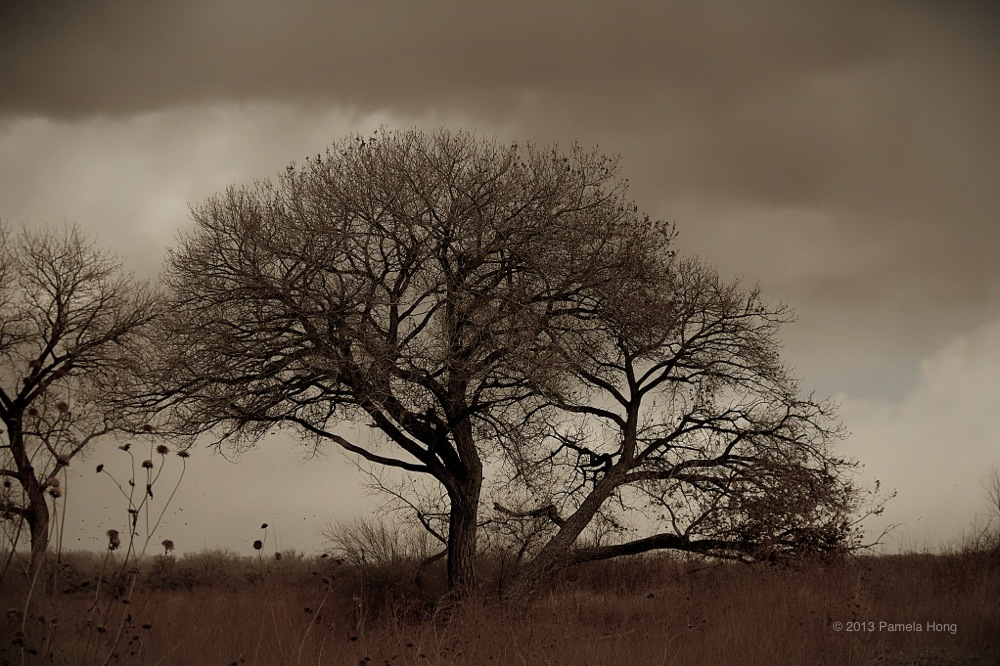 Bosque 6.jpg