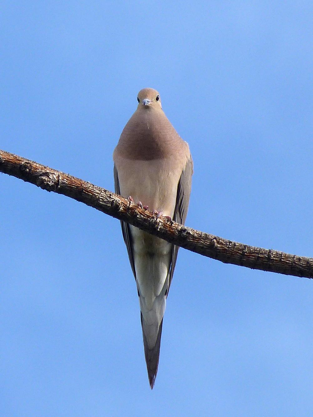 dove (2).jpg