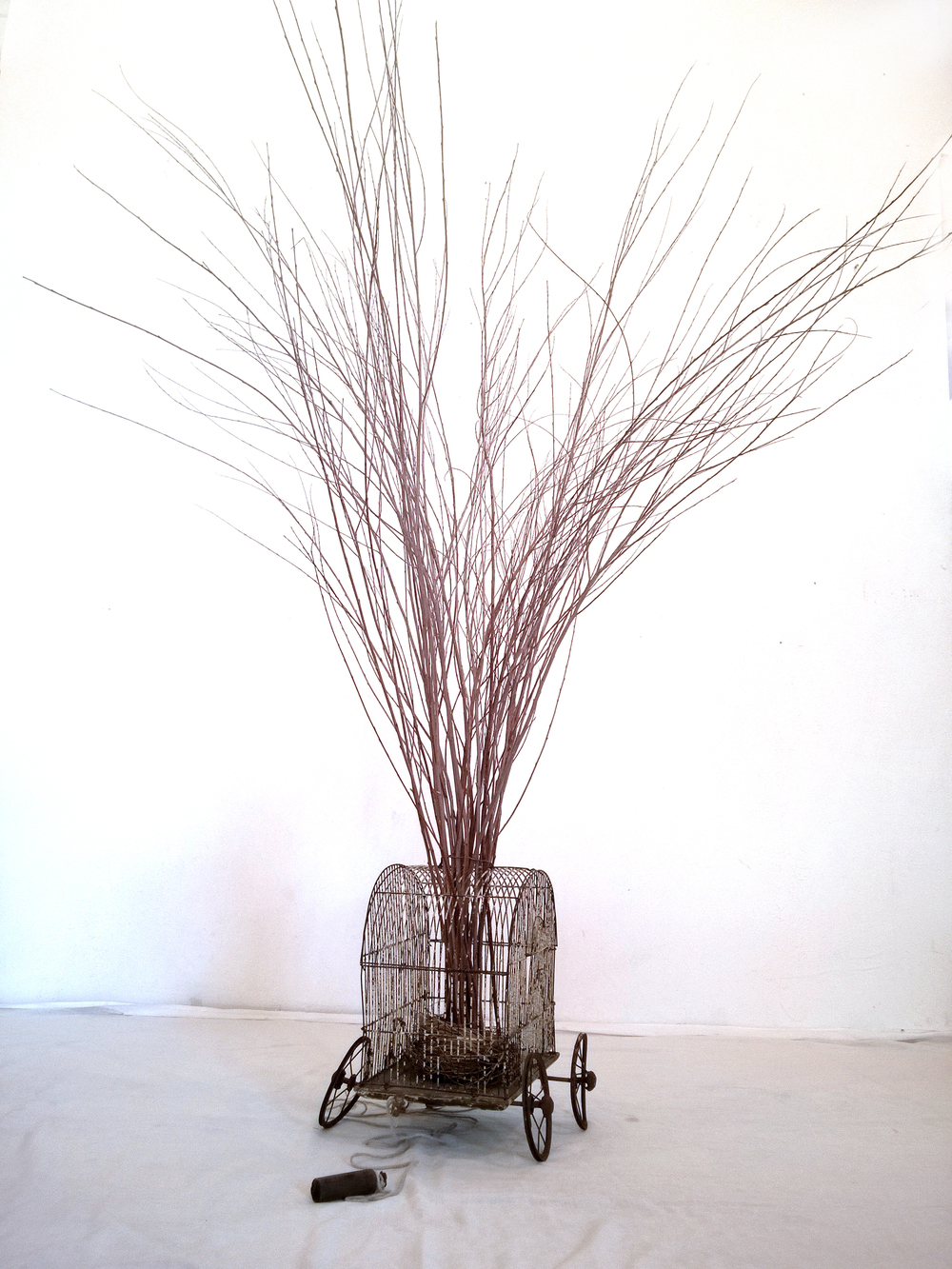 cage-tree.jpg