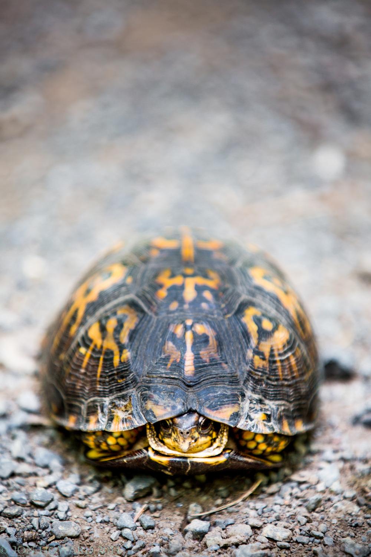 turtle-0006-Edit.jpg
