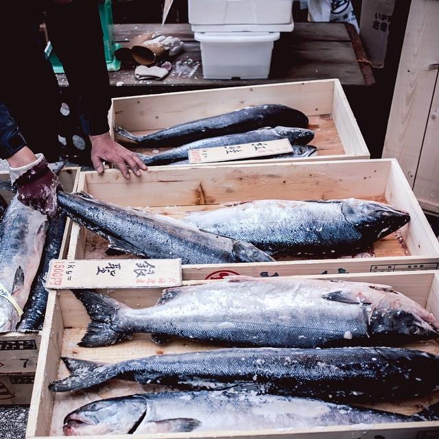 Hokkaido Salmon at Tsukiji Fish Market. #japan #japandailylife #japanesefood #tsukijifishmarket #pacificsalmon #hokkaidosalmon #fishvendor