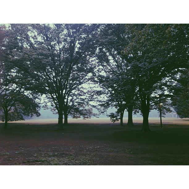 #yoyogipark after heavy rain #landscape #nature