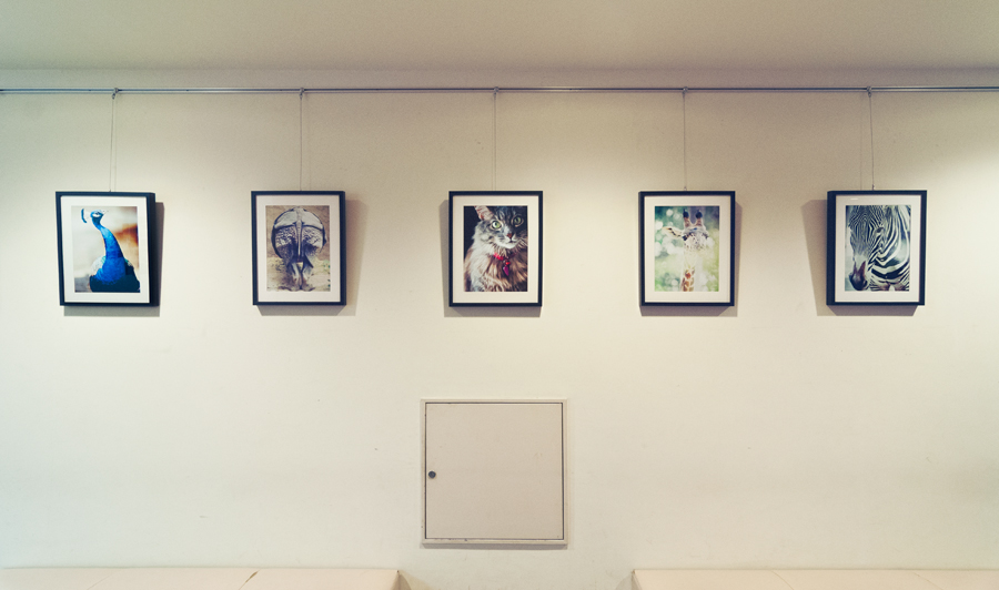 A local hospital (Tamagawa Hospital) has put up 5 of my animal photos to shine up the wall a little bit…mini gallery i call it :)
