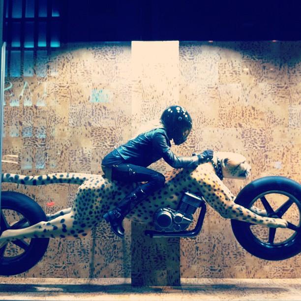 #fast as #cheetah #display #bike #motorcycle (Taken with Instagram)