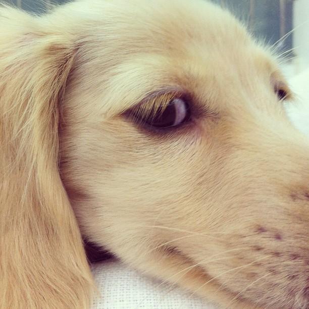 #dog #pet #animals (Taken with Instagram)