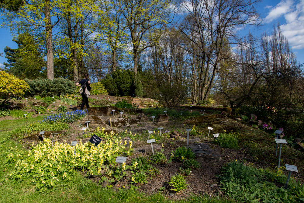 Flower gardens begin to bloom in Oslo Botanisk Hage