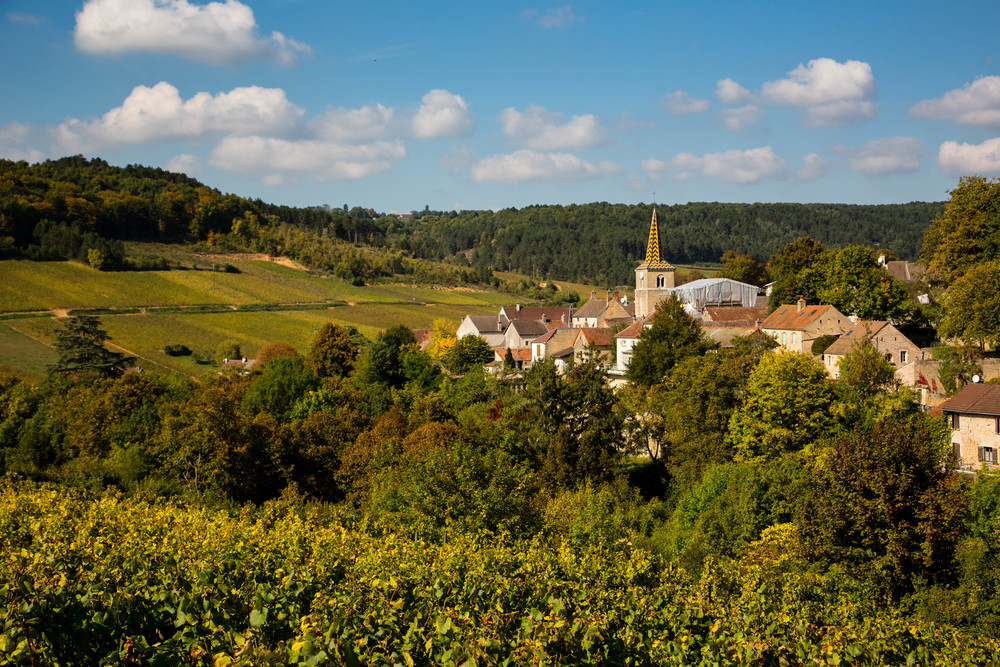 The village fenced in by the white grapes of the hill of Corton Charlemagne