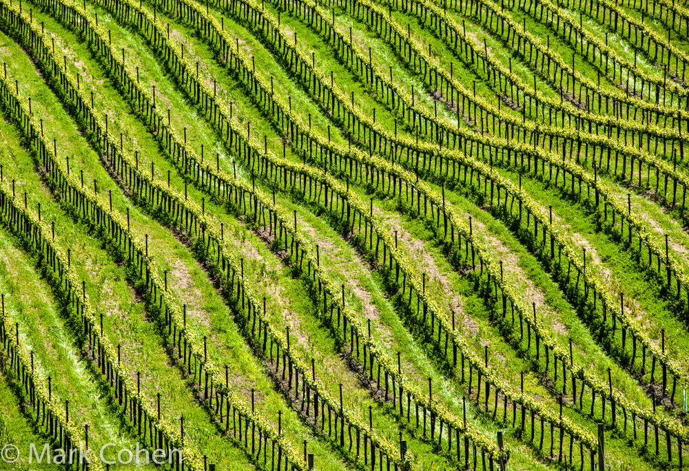 Vineyard no.1, Sonoma County, 2010